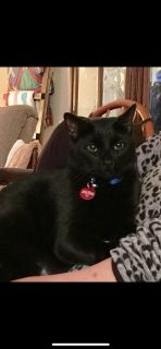 MISSING BLACK CAT (Bainbridge)