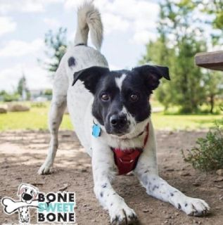 Pet holiday care Los Angeles - BoneSweetBone