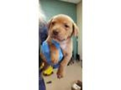 Adopt Janette* a Tan/Yellow/Fawn Mixed Breed (Medium) / Mixed dog in Anderson