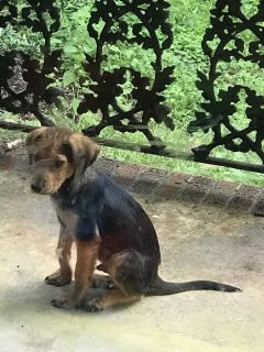 Dropped puppy needs forever home!