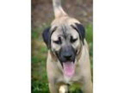 Adopt Dean Winchester a Anatolian Shepherd, Hound