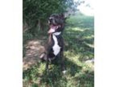 Adopt Dale a Mountain Cur
