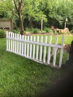 Chippy white New England style picket fencing