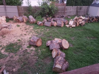 silver maple wood