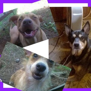 homeless with 3 dogs, No Preference