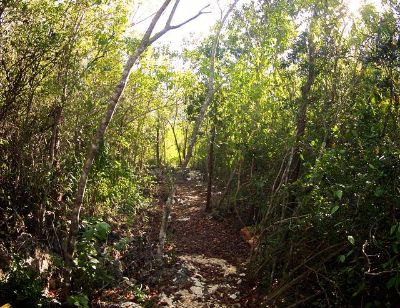 $163,000, FIRE SALE  New Life 2 acres  bamboo House Caribbean Island 3h from Houston