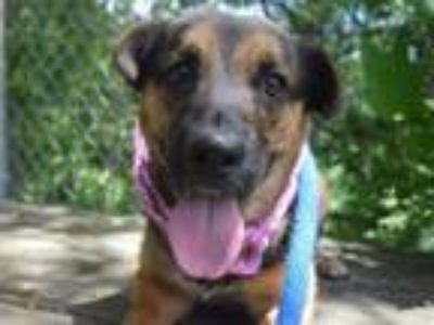 Adopt ETHEL a German Shepherd Dog, Mixed Breed