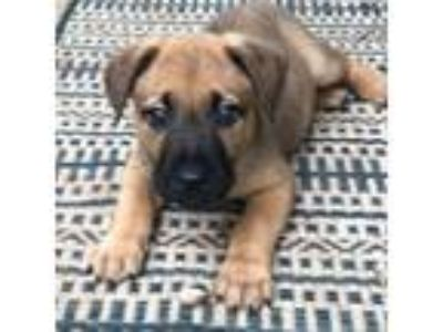 Adopt Squirt a Shepherd (Unknown Type) / Mixed dog in Austin, TX (25273272)