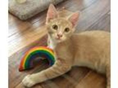 Adopt Caterpillar a Orange or Red (Mostly) Domestic Shorthair (short coat) cat