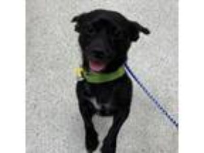 Adopt Lou PA a Black Terrier (Unknown Type, Medium) dog in Jacksonville