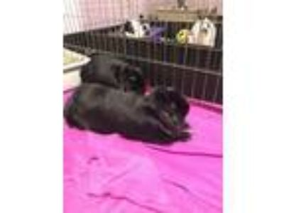 Adopt Cheerio / Kix a Bunny Rabbit