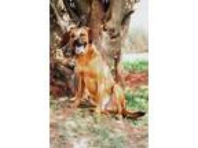 Adopt Hoggle/Jake a Shepherd, Pointer