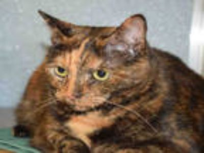 Adopt PENNY a Tortoiseshell Domestic Shorthair / Mixed (short coat) cat in