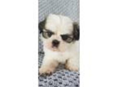 Puppies - For Sale Classifieds in Leesburg, Georgia - Claz org