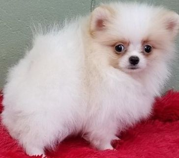 Craigslist Animals And Pets For Adoption Classified Ads In