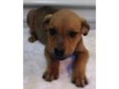 Adopt Five Identical Quintuplets a Hound (Unknown Type) / Mixed dog in Homer