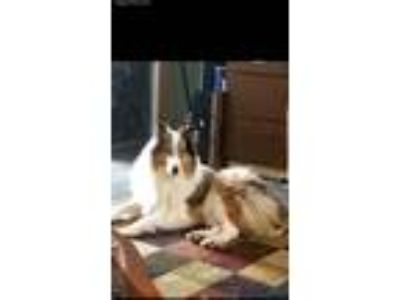 Craigslist - Animals and Pets for Adoption Classifieds in Mt Vernon
