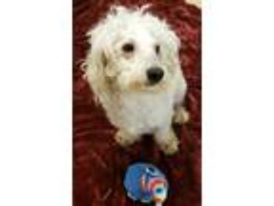 Mini - Animals and Pets for Adoption Classified Ads in