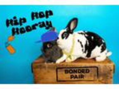 Adopt Delia and Poppie a Mini Rex, Lionhead
