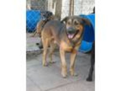 Adopt Brownie a Mixed Breed
