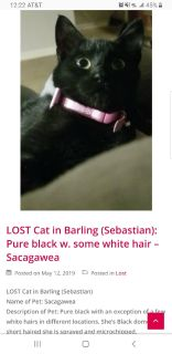 MISSING CAT FROM BARLING