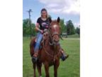 2005 AQHA Registered Sorrel Mare