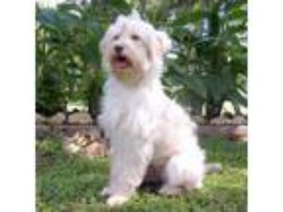 Adopt Rosie a Terrier, Mixed Breed