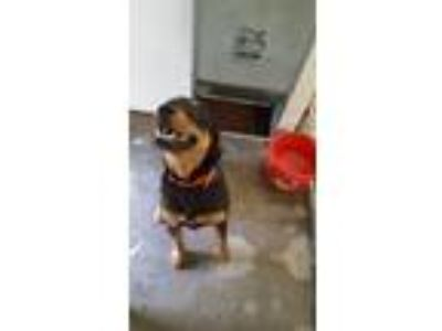 Adopt Alley a Mixed Breed
