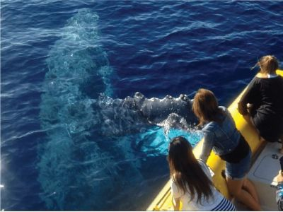 Ultimate Whale Watching & Snorkel