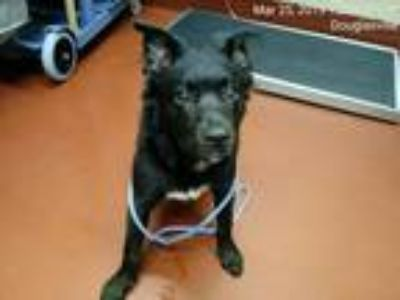 Adopt Mimic a Black Terrier (Unknown Type, Medium) / Border Collie dog in