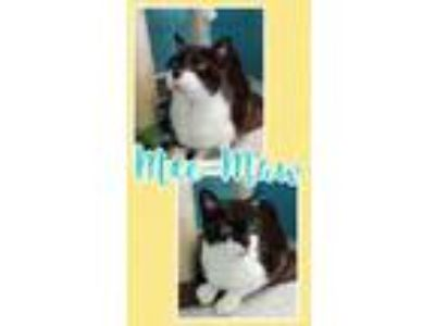 Adopt Meemaw a All Black Domestic Shorthair / Domestic Shorthair / Mixed cat in