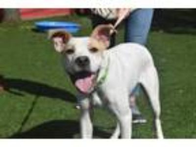 Adopt Phillip a Mixed Breed