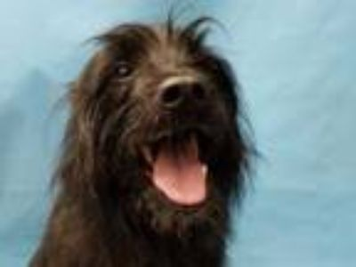 Adopt Buster a Terrier