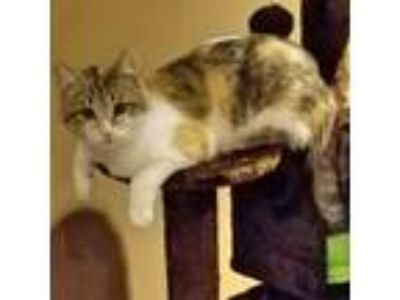 Adopt *Kitsy a Tortoiseshell Domestic Mediumhair / Mixed cat in Eastland