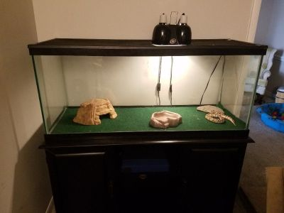 Pastel lesser ball python, cage, stand