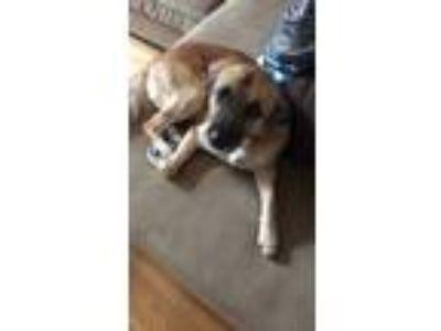 Adopt milo a Black - with Tan, Yellow or Fawn German Shepherd Dog / Mixed dog in