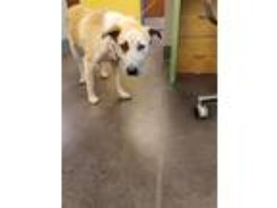 Adopt 13523 a Shepherd (Unknown Type) / Mixed dog in Norman, OK (25347922)