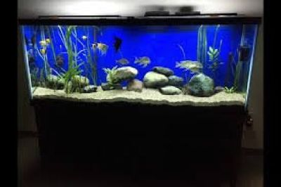 Wholesale Aquarium supplies | Aquarium products