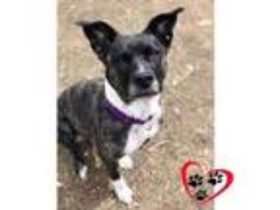 Adopt Lady Paw Paw a Border Collie