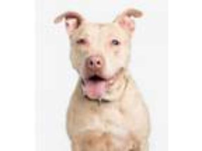 Adopt Apricot a Mixed Breed