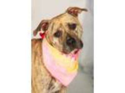 Adopt Whinney a Brindle Terrier (Unknown Type, Small) / Mixed dog in Greenville
