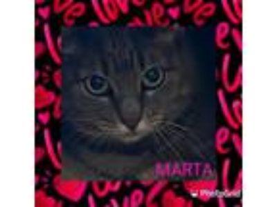 Adopt Marta a Torbie, Tabby