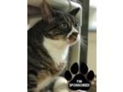 Adopt ECHO a All Black Domestic Shorthair / Domestic Shorthair / Mixed cat in