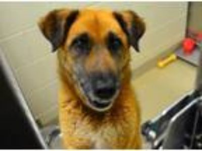 Adopt GRIM a German Shepherd Dog, Mixed Breed