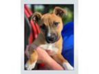 Adopt KISMET a Mixed Breed