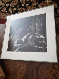 Gorgeous black and white signed picture