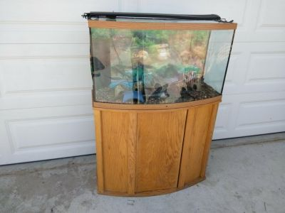 Fish Aquarium/beautiful