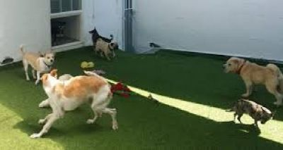 Bone Sweet Bone – Dog Boarding & Dog Sitter in Los Angeles with Safe Environment