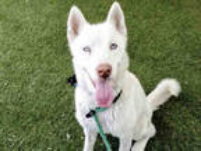 Adopt MIKE a White Mixed Breed (Medium) / Mixed dog in Van Nuys, CA (25008804)