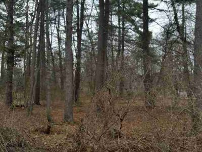 Lot 113 Orbison Grove Huntingdon, Wooded lots.